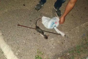 Απανθρωπιά: πέταξαν ζωντανό γατάκι στα σκουπίδια στο Γιαννούζι Αγρινίου