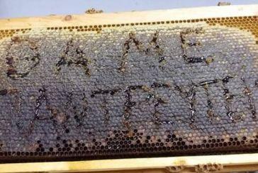 Η πρόταση γάμου ενός μελισσοκόμου!