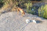 Χάθηκε σκυλίτσα στο Αγρίνιο
