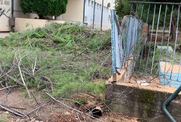 Πολλές πτώσεις δέντρων από την πρωινή βροχόπτωση στο Αγρίνιο