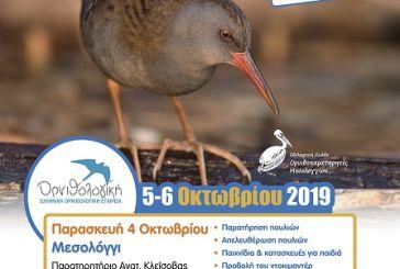 Εκδήλωση στο Μεσολόγγι για την Ευρωπαϊκή Γιορτή Πουλιών 2019