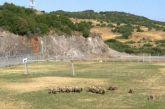 Το άρθρο σε μεγάλο αθηναϊκό site και το γήπεδο των Φυτειών με τα πρόβατα