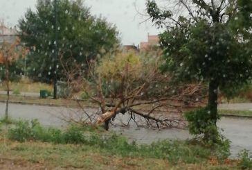Πτώση δέντρου σε δρόμο του  Άγιο Κωνσταντίνου Αγρινίου