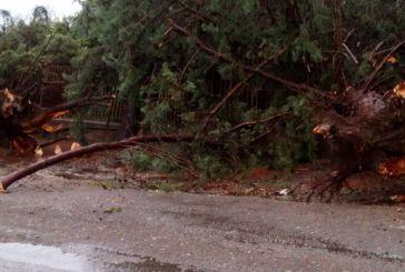 Μαζική πτώση δένδρων από ανεμοστρόβιλο προκάλεσε ζημιές στο δημοτικό σχολείο Ματαράγκας (φωτό)