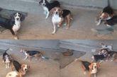 Καταγγελία-Ναύπακτος: Γυναίκα φυλάκισε θηλυκό σκυλί και «εκμεταλλεύεται» τα κουτάβια του