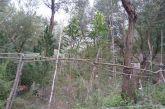 Προφυλακιστέος ο κατηγορούμενος για τη χασισοκαλλιέργεια στην περιοχή της Σπολάιτας