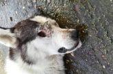 Οργή στο Μεσολόγγι: φόλιασαν σκύλο και του έβγαλαν τα μάτια (σκληρές εικόνες)