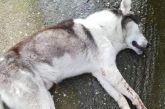 Δικογραφία για τη φόλα σε σκύλο στο Μεσολόγγι
