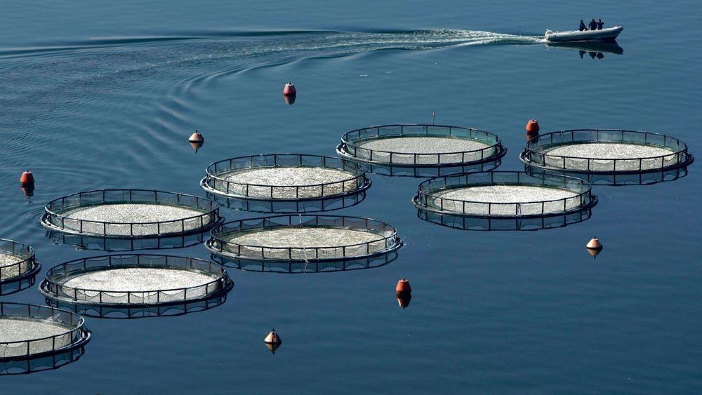 Περιοχές Ολοκληρωμένης Ανάπτυξης Υδατοκαλλιέργειας (ΠΟΑΥ): Οι υδατοκαλλιέργειες μπαίνουν σε τάξη