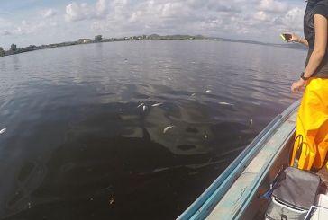 Η εξήγηση για τον μαζικό θάνατο ψαριών στη Λιμνοθάλασσα Αιτωλικού