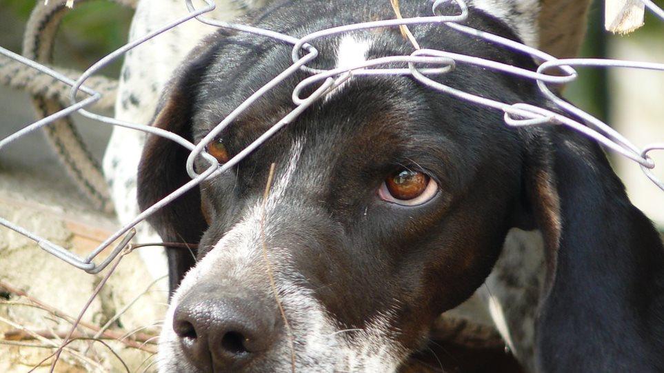 Κακοποίηση ζώων: «Ανοιχτή πληγή» στην Ελλάδα, παρά το αυστηρό νομικό πλαίσιο