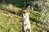 Αγρίνιο: Οργή για την κρεμασμένη αλεπού