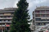 Το χριστουγεννιάτικο δένδρο στήθηκε στην πλατεία του Αγρινίου, αύριο Πέμπτη (αν δεν βρέχει) το άναμμα
