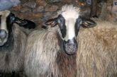 Ξεκινά η εκπαίδευση νέων κτηνοτρόφων στο Αγρίνιο με το πρόγραμμα «Νέα Γεωργία για τη Νέα Γενιά»