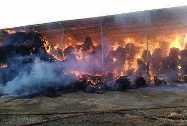 Πολύωρη η μάχη με τις φλόγες στην Παλαιοκαρυά εξαιτίας του τριφυλλιού