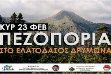 Πεζοπορία στον Δρυμώνα από τον Ορειβατικό Σύλλογο Μεσολογγίου