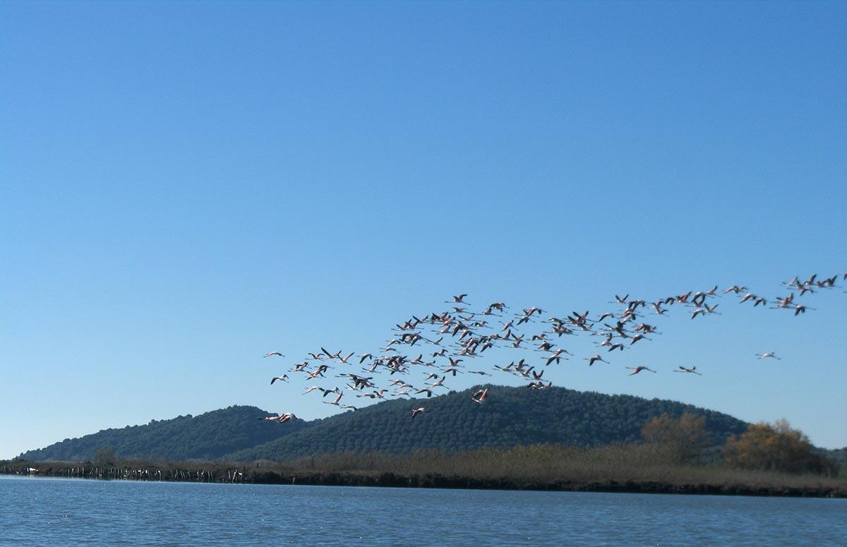 Δικτύωση Φορέων Διαχείρισης Λιμνοθάλασσας – Ακαρνανικών και Αμβρακικού – Λευκάδας για τις χειμερινές καταμετρήσεις υδρόβιων πουλιών 2020