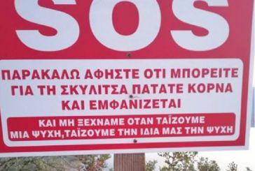 Aιτωλοακαρνανία : Πινακίδα για να πατήσεις κόρνα και να ταΐσεις μια αδέσποτη σκυλίτσα!