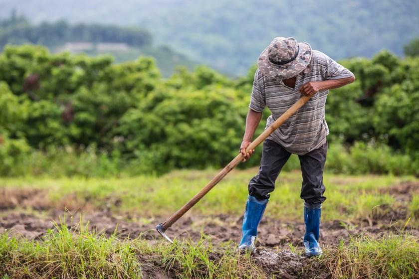 Ανοίγει το ΟΣΔΕ ο ΟΠΕΚΕΠΕ για την υποβολή των δηλώσεων από τους παραγωγούς