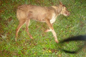 Παναιτώλιο:Σκύλος βρέθηκε νεκρός από βλήματα κυνηγητικού όπλου