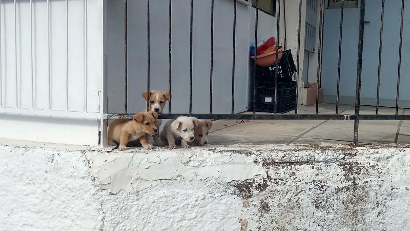 Αγρίνιο: τέσσερα κουταβάκια αναζητούν στέγη…