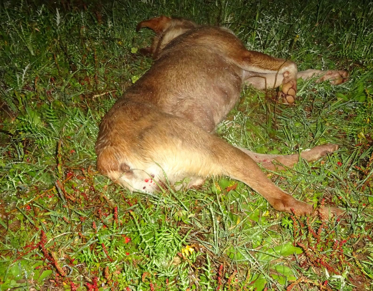 Παναιτώλιο: Νεκρός σκύλος από σκάγια κυνηγετικού όπλου (φωτο)