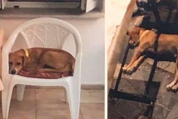 Σκυλάκια νεκρά από φόλες στο Μαχαιρά Ξηρομέρου