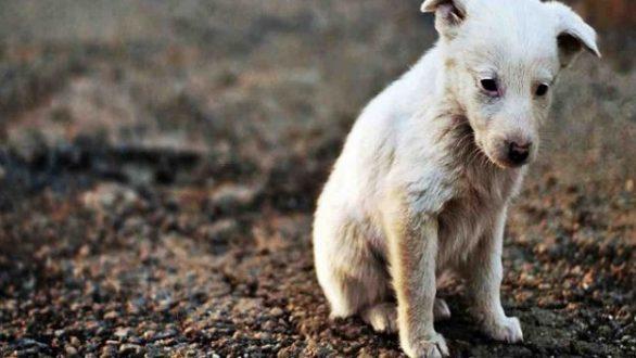 Το μήνυμα της Φιλοζωικής Οργάνωσης Αγρινίου για την Παγκόσμια Ημέρα Αδέσποτων Ζώων