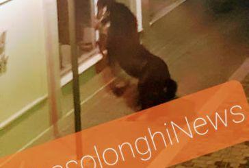 """Μεσολόγγι: Άλογο """"έσπασε"""" την καραντίνα και """"νυχτοπερπατούσε"""" στο κέντρο της πόλης"""