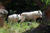 Κατέβηκαν λύκοι στην Αθηνών – Λαμίας και προκλήθηκε τροχαίο ατύχημα (φωτο)