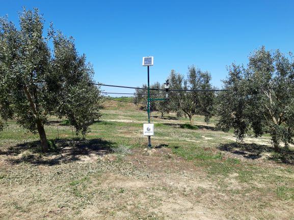 Αιτωλοακαρνανία: Άλμα ανταγωνιστικότητας της ελιάς Καλαμών με την ευφυή γεωργία