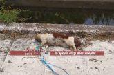 Μεσολόγγι: Πέταξαν σκοτωμένη γάτα με τα πόδια δεμένα