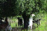 Δήμος Αμφιλοχίας: Ενημέρωση για τις υποχρεώσεις ιδιοκτητών δεσποζόμενων ζώων