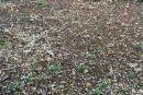 Σφοδρή χαλαζόπτωση στην Αιτωλοακαρνανία – Ζημιές στις ελιές