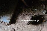 Χειροβομβίδες βρέθηκαν σε αυλή σπιτιού στη Χόμορη ορεινής Ναυπακτίας (βίντεο)