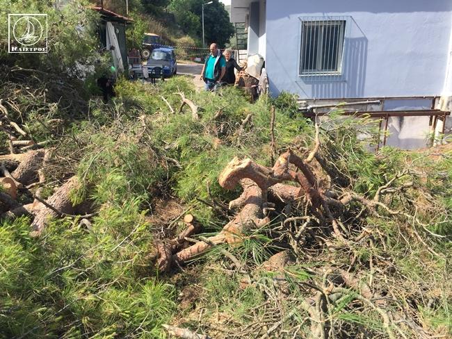Αμφιλοχία: Πεύκα 25 μέτρων έπεσαν σε στέγη σπιτιού