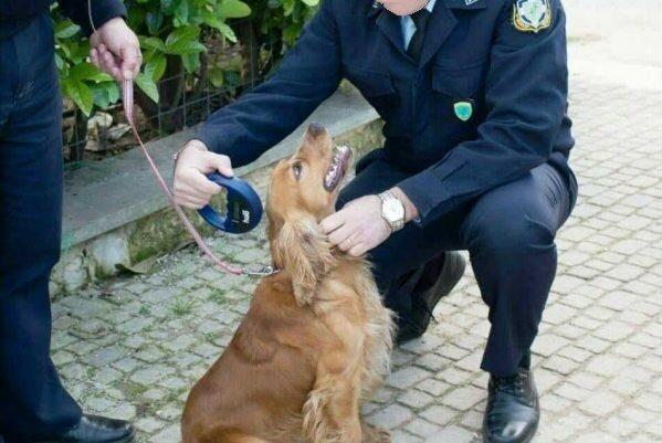 Έλεγχοι σε ζώα συντροφιάς από μικτό κλιμάκιο στη Ναύπακτο
