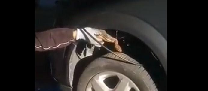 Ο απεγκλωβισμός ενός λαφιάτη από κινητήρα αυτοκινήτου στο Αγρίνιο (βίντεο)