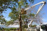 Ναύπακτος: Ξεκίνησαν οι εργασίες διάσωσης των πλατάνων στην παραλία Ψανής