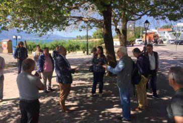 Ναύπακτος: Κόβονται τα δύο πλατάνια της Ψανής για τον αποκλεισμό μετάδοσης του μεταχρωματικού έλκους