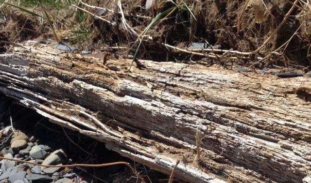 Ευρυτανία: Νεκρός άνδρας που καταπλακώθηκε από κορμό δέντρου
