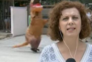 Απρόοπτο σε δελτίο της ΕΡΤ: «Δεινόσαυρος»… τρέχει πίσω από ρεπόρτερ – Δείτε το βίντεο
