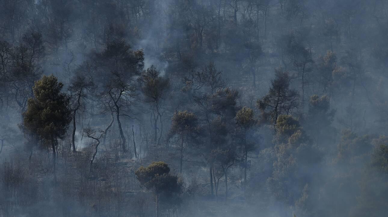 Φωτιά στην Ηλεία: Συνελήφθη ένα άτομο για εμπρησμό από αμέλεια