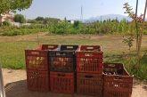 Δήμος Αγρινίου: Κηπευτικά προϊόντα των ωφελουμένων του Δημοτικού Λαχανόκηπου στοΚοινωνικό Παντοπωλείο