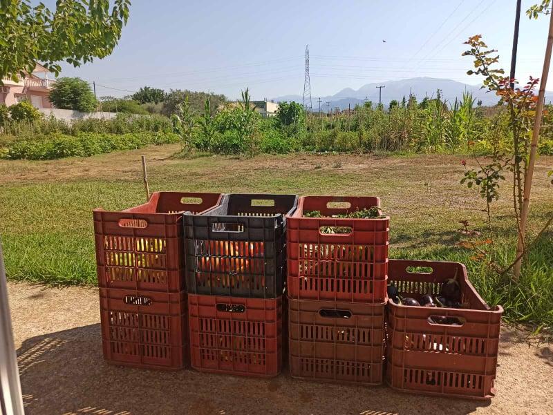 Κηπευτικά προϊόντα των ωφελουμένων του Δημοτικού Λαχανόκηπου προσφορά στοΚοινωνικό Παντοπωλείο Αγρινίου