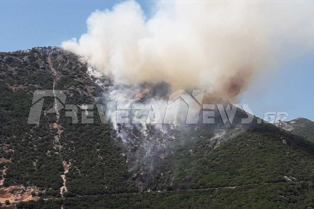 Πυρκαγιά σε δασική έκταση στο Σκεπαστό Πρέβεζας