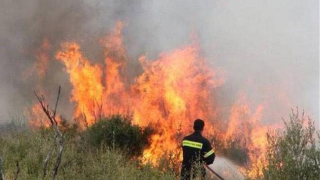 Κινητοποίηση για φωτιά στα Αμπέλια Παρακαμπυλίων