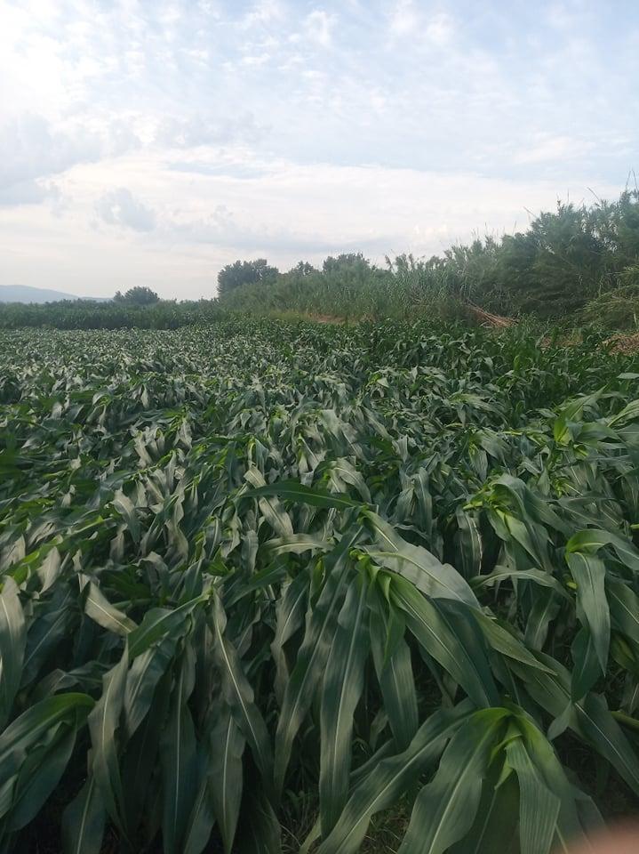 Καταστροφές σε καλλιέργειες στη Μεγάλη Χώρα
