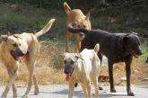 Kαταγγελία Φιλοζωικής Αγρινίου: κακοπροαίρετος έριξε κουταβάκια στο καταφύγιο με τα μεγαλύτερα σκυλιά