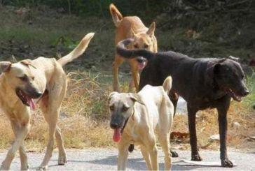 Φιλοζωική Αγρινίου: «σοκαριστικές καταγγελίες για τη διαχείριση των αδέσποτων ζώων συντροφιάς από τις αρμόδιες υπηρεσίες»